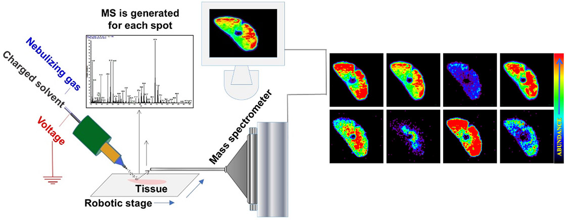 Schematic presentation of ambient mass spectrometry imaging technique- Desorption Electrospray Ionization Mass Spectrometry Imaging