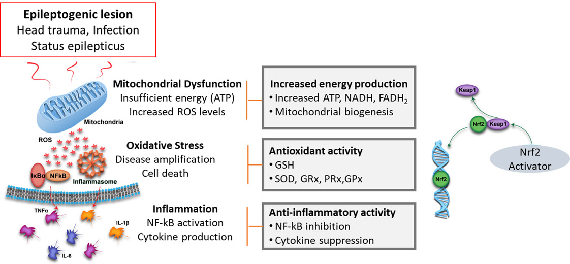 the multiple neuroprotective Effects of Nrf2